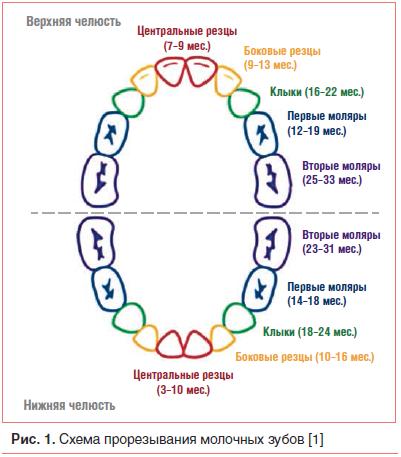 Как выглядят на фото набухшие десны при прорезывании первых зубов у грудничков