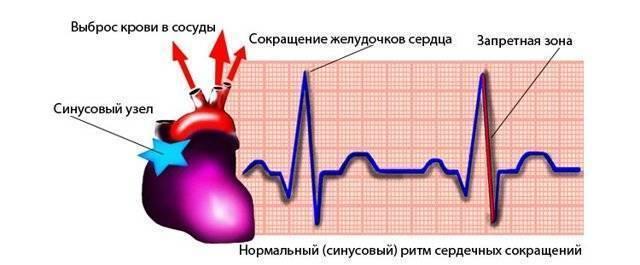 Экг или узи в 1 год ? - экг ребенку 1 год - стр. 2 - запись пользователя надя (nadia_mtv) в сообществе детские болезни от года до трех в категории анализы, узи, рентген - babyblog.ru