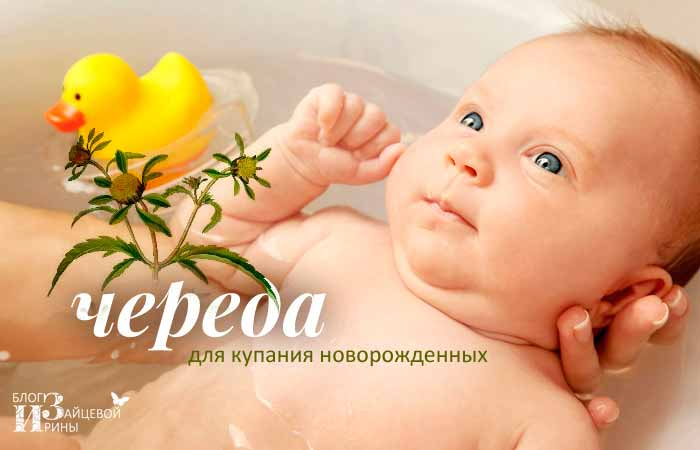 Чем полезна череда для купания новорожденных и как ее заварить