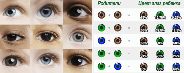 Возможные цвета глаз у ребенка от родителей: таблица
