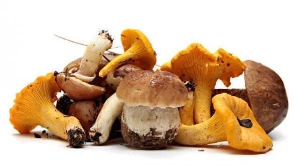 С какого возраста можно давать детям грибы
