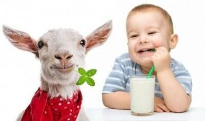 Польза козьего молока для грудного ребенка