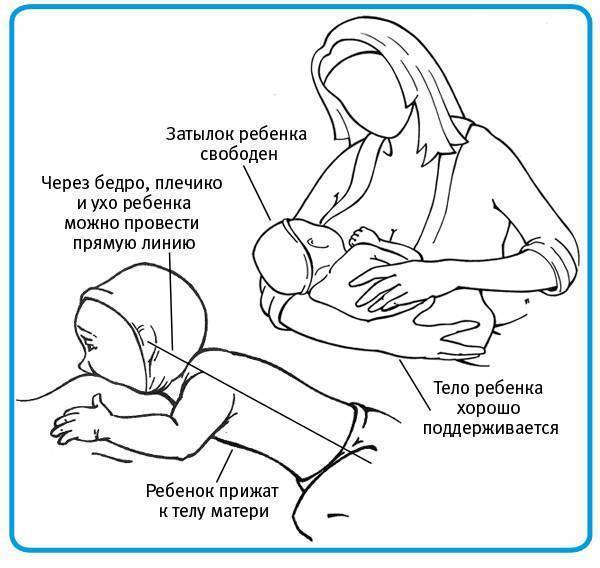 Прикладываем малыша к груди: пошаговый алгоритм
