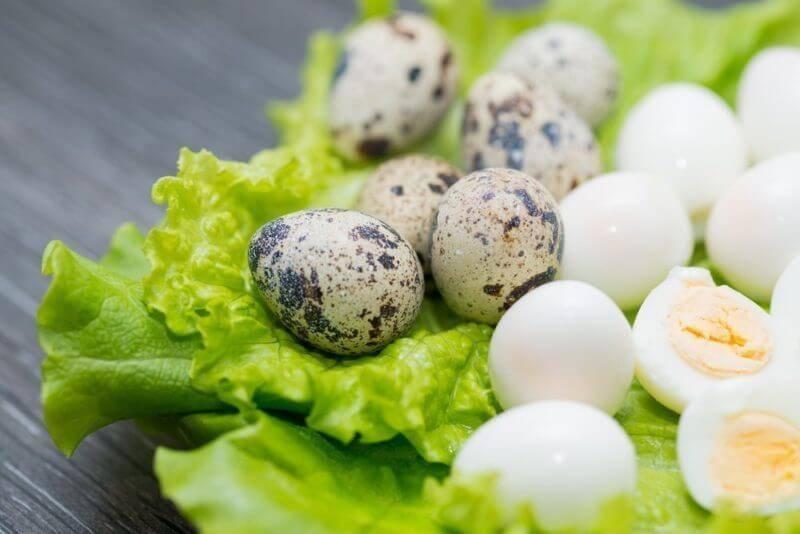 Как варить перепелиные яйца правильно. сколько времени варить перепелиные яйца вкрутую и всмятку