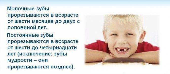 Skolko-zubov-dolzhno-byt-v-god - запись пользователя ~lenochka~ (lenakapustinskaya) в сообществе детские болезни от года до трех в категории зубки - babyblog.ru