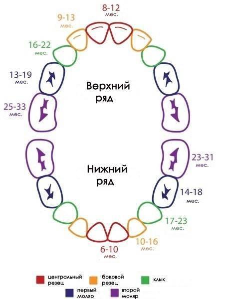 Схема прорезывания зубов у детей по возрасту