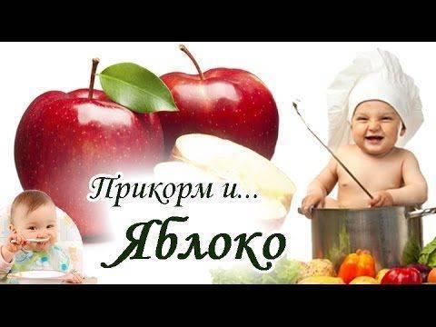 Первый прикорм. как приготовить кабачок? - запись пользователя настенька (id1159637) в дневнике - babyblog.ru