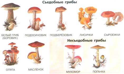 Можно ли давать ребенку грибы: с какого возраста и как готовить
