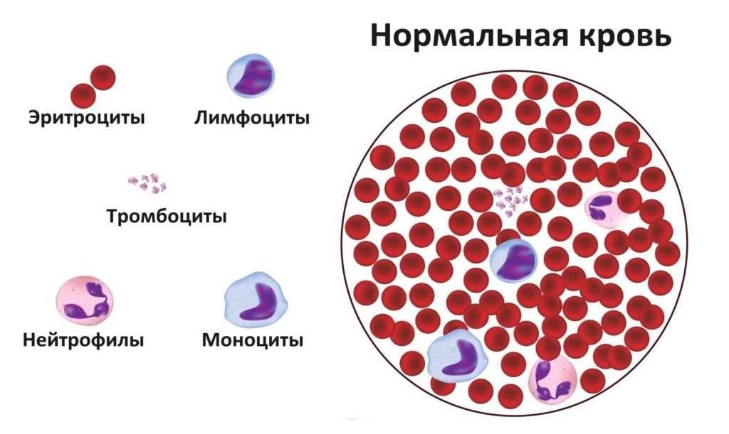 Лейкоциты в крови норма у детей - 10 причин повышения