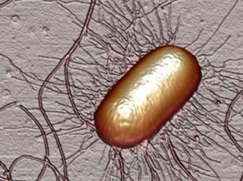 Дисбактериоз у грудничков