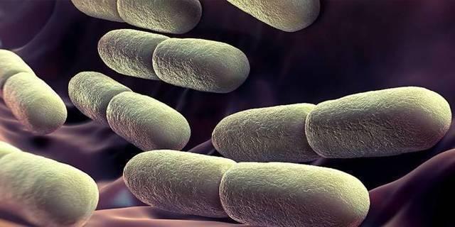 Понятие йодофильной флоры и причины его появления в кале
