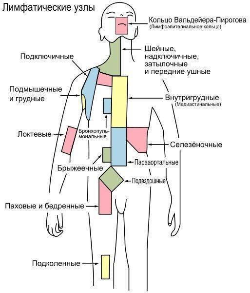 Воспаление лимфоузлов в кишечнике - причины и лечение