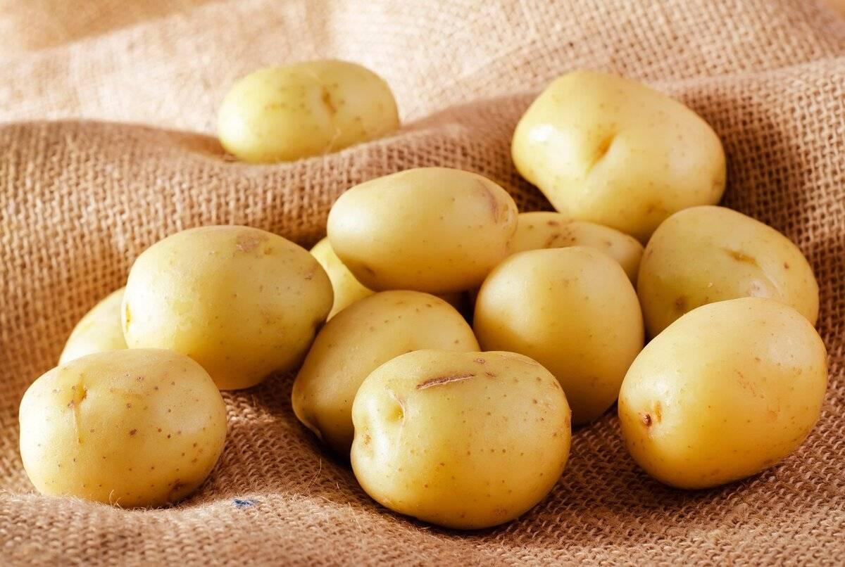 Когда вводить картофель в прикорм при грудном вскармливании новорожденного