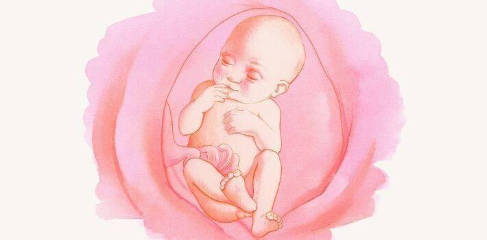 Почему ребенок икает во время беременности?