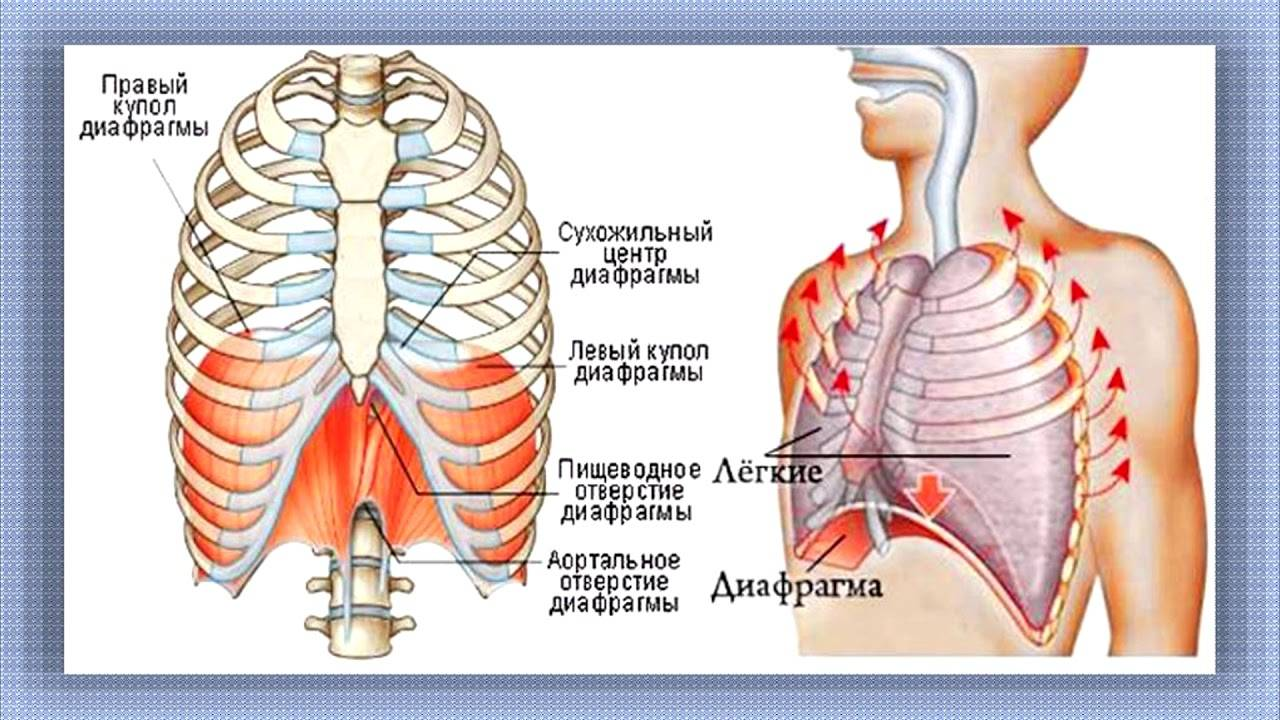 Деформация грудной клетки у детей: врожденная и приобретенная. можно ли что-то предпринять