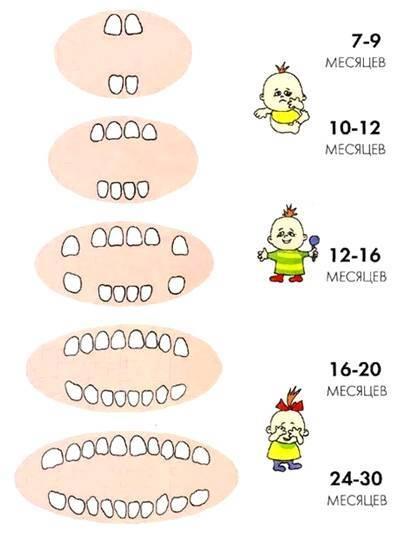 Прорезывание зубов у малышей: в каком порядке растут зубы