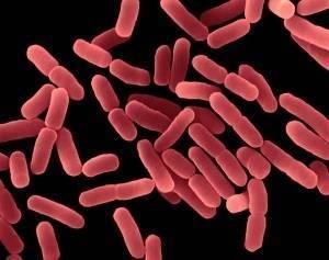 Значение бактерий в анализе кала
