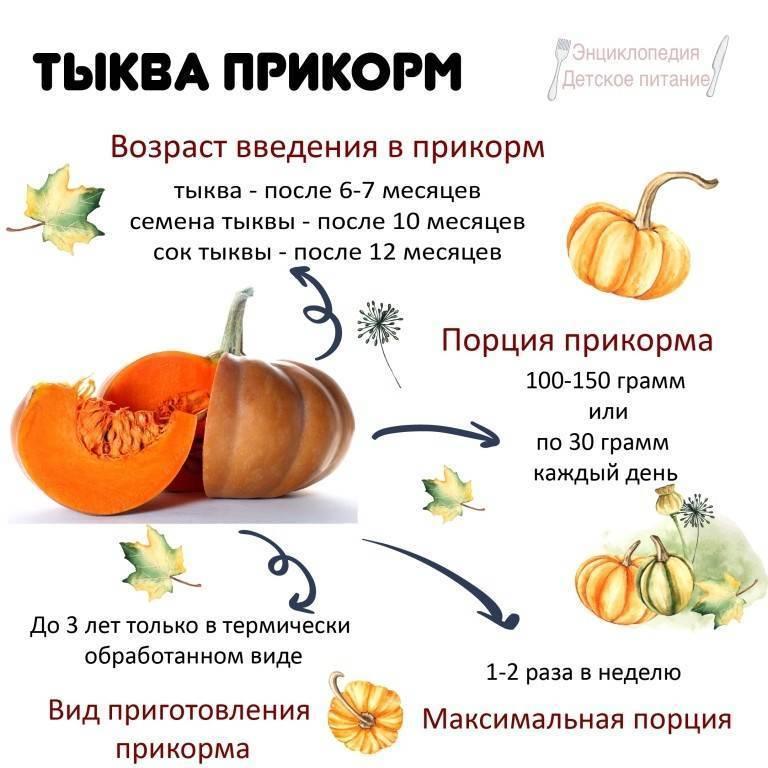 Как правильно вводить тыкву в прикорм малыша