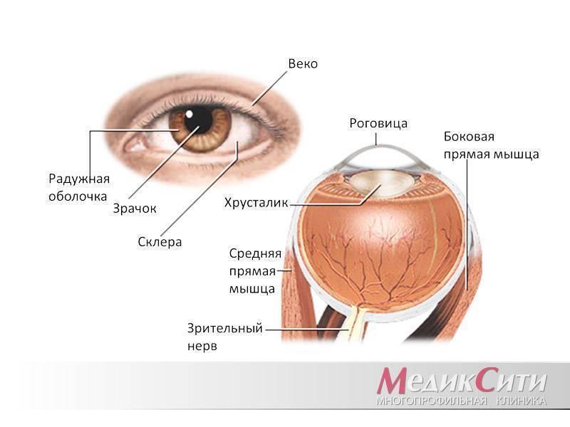 Ангиопатия сетчатки глаза у ребенка — что это такое