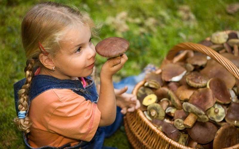 Можно ли детям шампиньоны: с какого возраста давать грибы, со скольки лет есть, комаровский