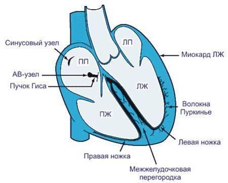 Kak-delaetsya-ekg - запись пользователя nataly (anatalis) в сообществе здоровье новорожденных в категории болезни сердца - babyblog.ru