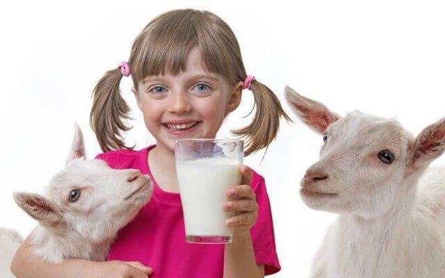 С какого возраста можно давать козье молоко ребенку?
