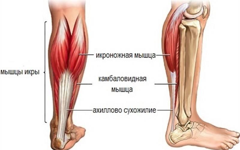 Болят ноги, точнее икры - запись пользователя kerry (kerry1000) в сообществе здоровье - от трех до шести лет в категории нужна помощь! - babyblog.ru