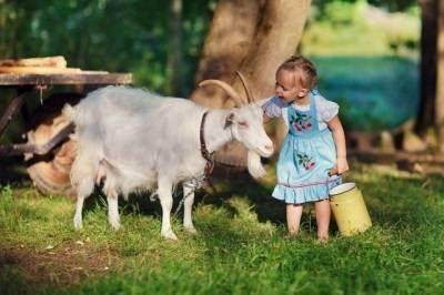 Козье молоко.... - во сколько месяцев можно давать козье молоко - запись пользователя странная (masya683) в дневнике - babyblog.ru