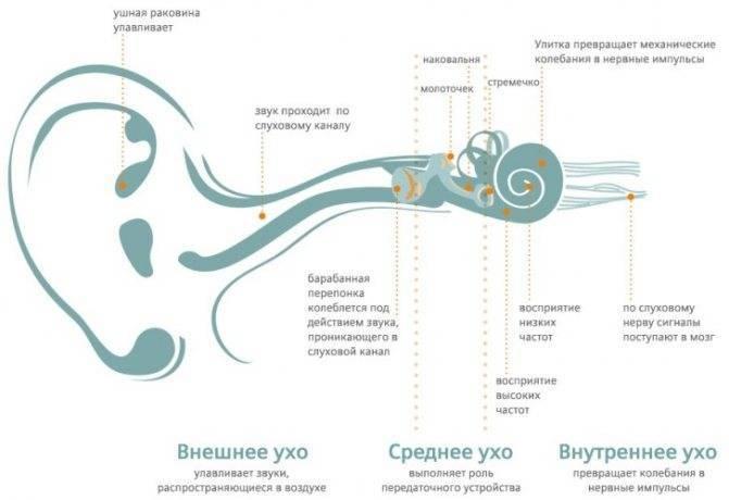 Как чистить ушки новорожденному??