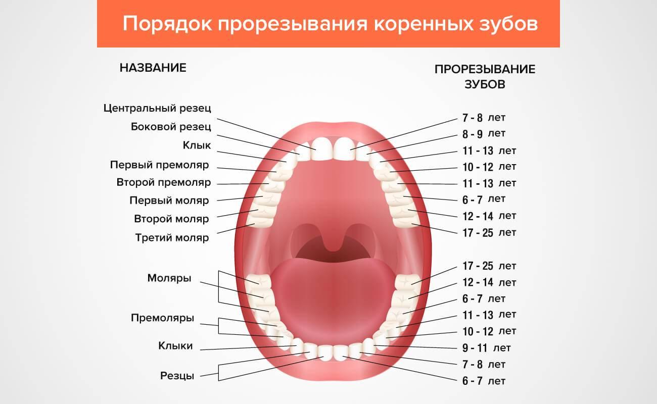 Какие зубы первыми лезут у ребенка?