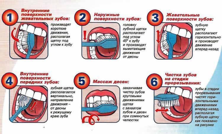 Сколько зубов в год у ребенка должно быть