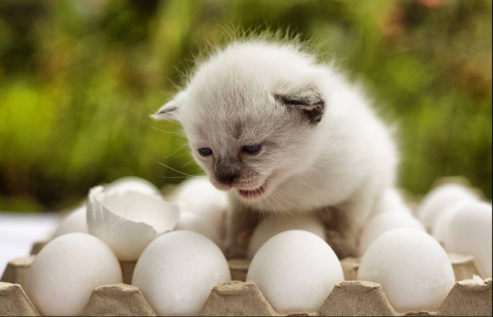 С какого возраста можно давать ребенку яйцо и блюда из него