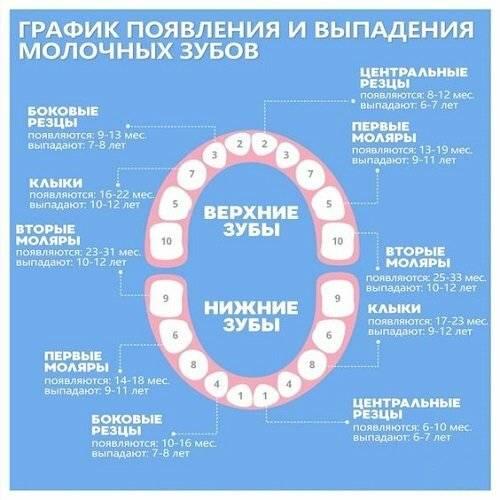 Прорезывание зубов у детей: график и особенности процесса